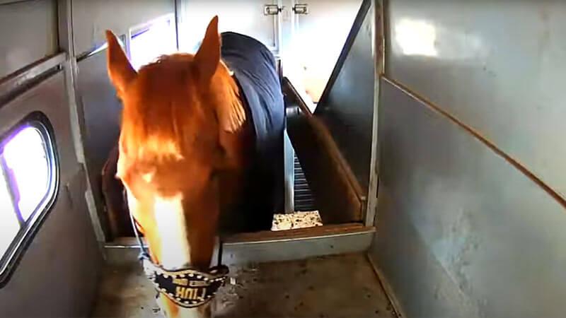 livestock vehicle camera